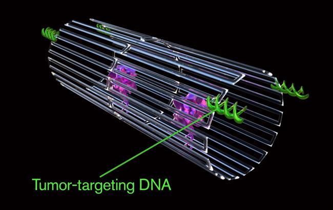 Los nanorobots se pueden programar para transportar cargas moleculares y causar bloqueos en el suministro de sangre tumoral en el sitio, lo que puede provocar la muerte del tejido y reducir el tamaño del tumor.