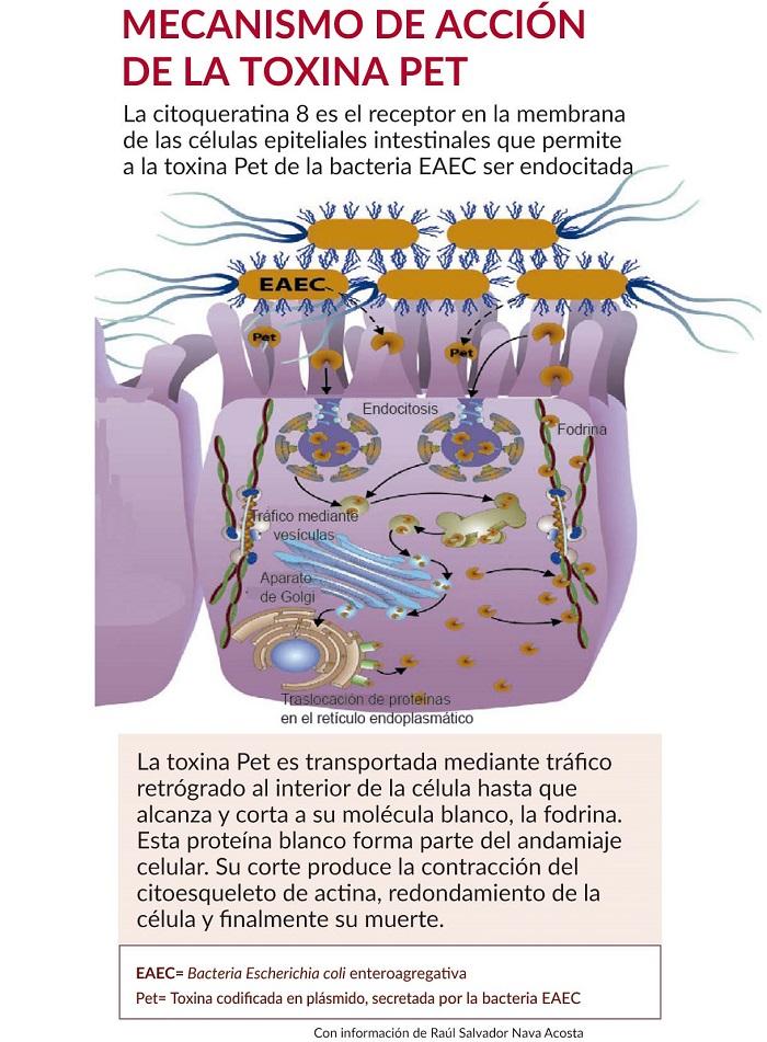 Con información de Raúl Salvador Nava Acosta