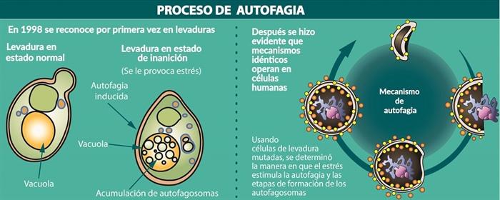 Infografía: con información de Nobel Prize